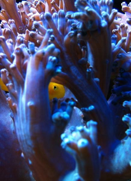 Biodiversity Wirbellose&Fische