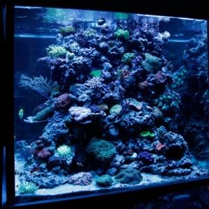 Meerwasseraquarium by benaqua